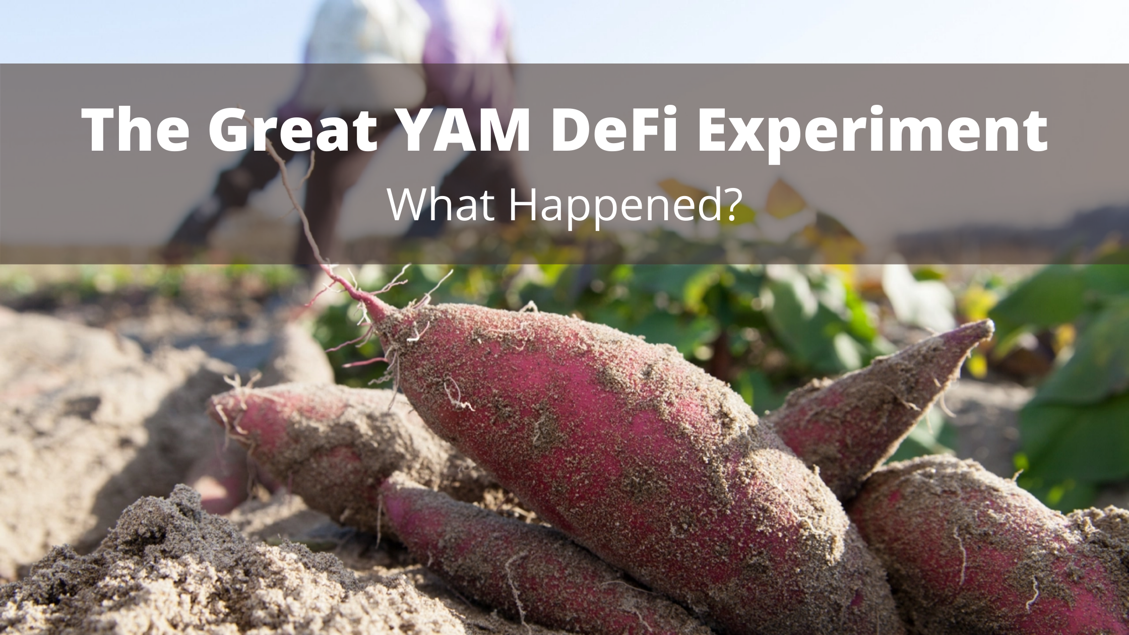 YAM DeFi Experiment
